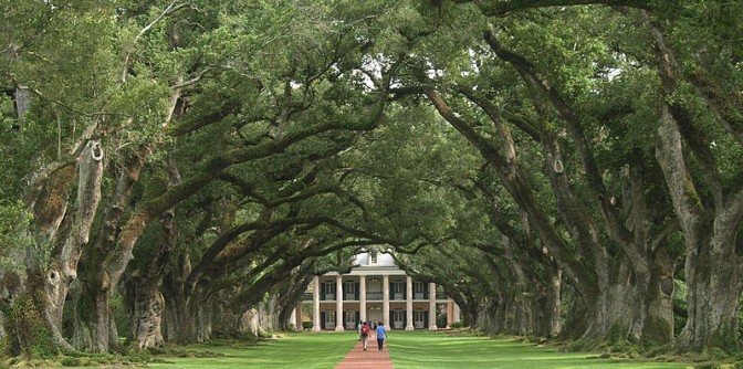 Live Oaks at Oak Alley (image via Emily Richardson and used under Wikimedia Commons agreement)